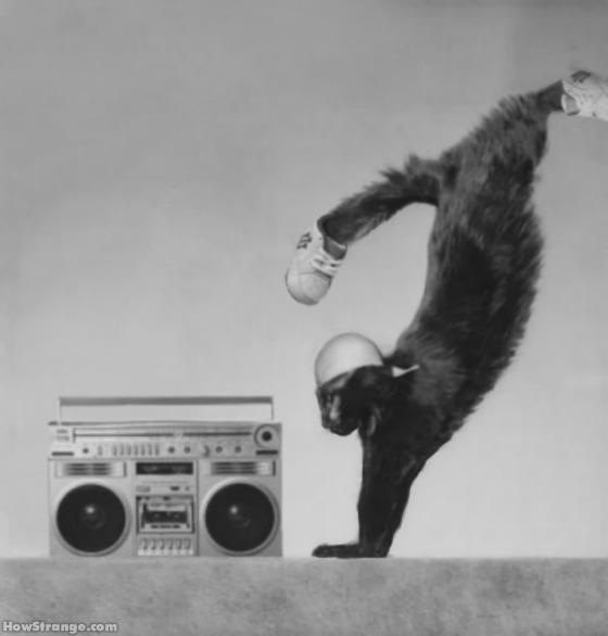 breakdance_gato_bboy